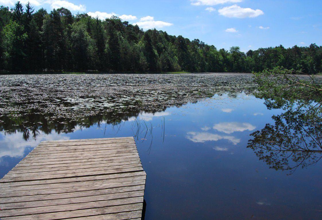 L'étang de Lieschbach
