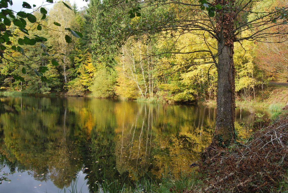 L'automne s'installe sur les berges du Glasbronn