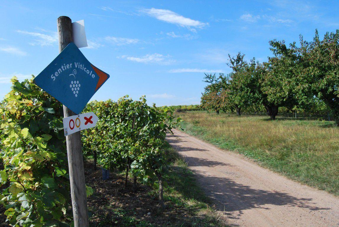 Les sentiers des vignobles de la vallée de la Mossig