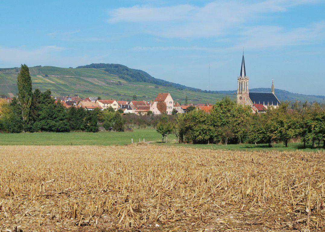 Retour à Westhoffen. D'ici on aperçoit l'eglise St Martin et la forteresse médiévale au nom poétique de Rosenbourg, le château de la Rose ...