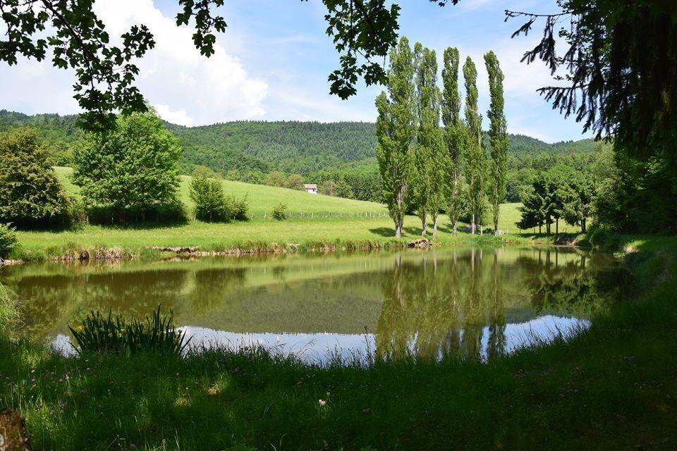Un étang privé
