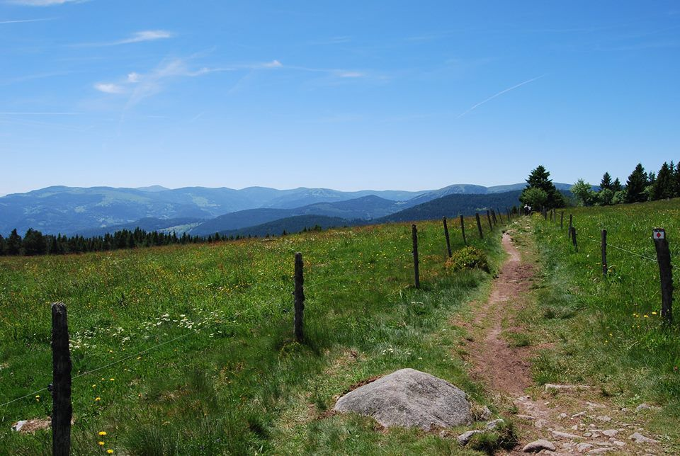 La vue se dégage enfin sur la chaîne des Vosges