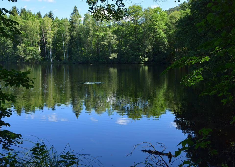 L'étang de l'Erbsenweiher