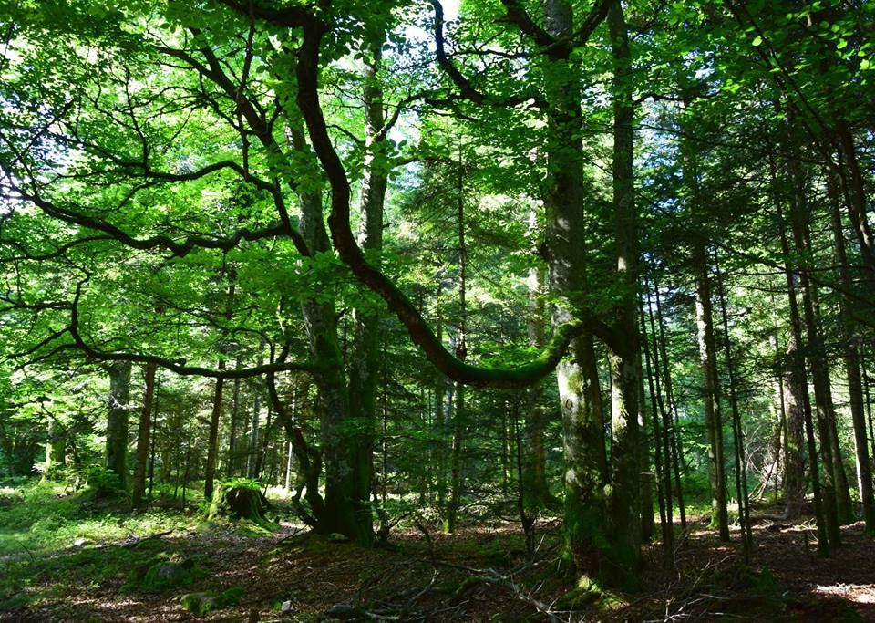 La mystérieuse forêt du Fossard