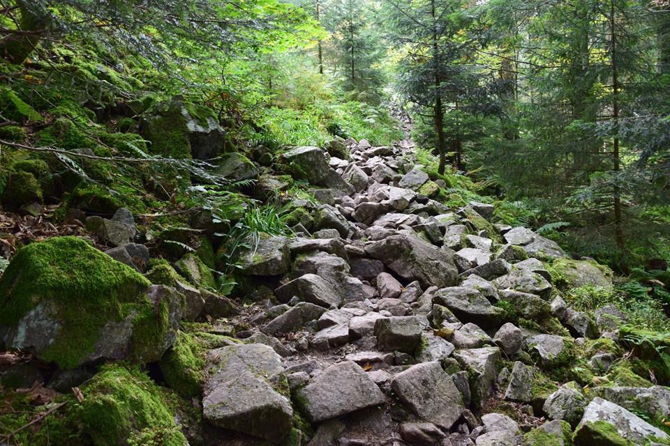 Un sentier particulièrement raide et scabreux mène au roches des vieux Chevaux