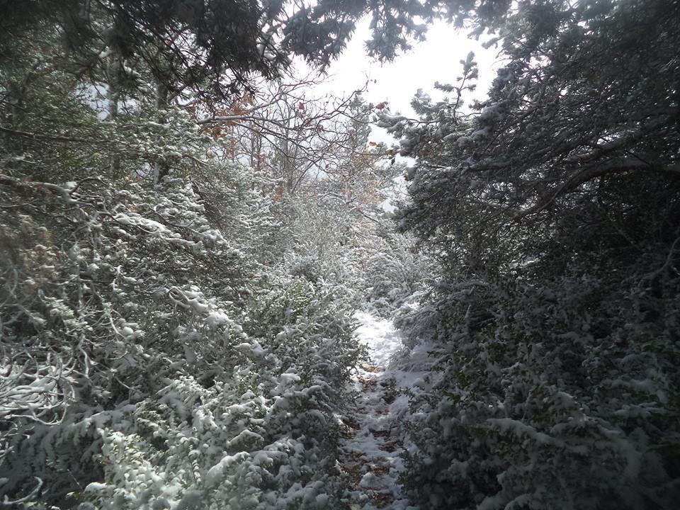 neige à gogo