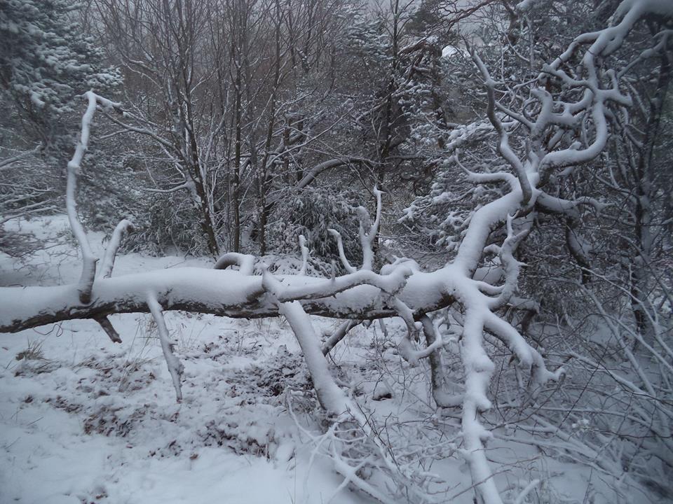 la nature morte reprend vie avec la neige
