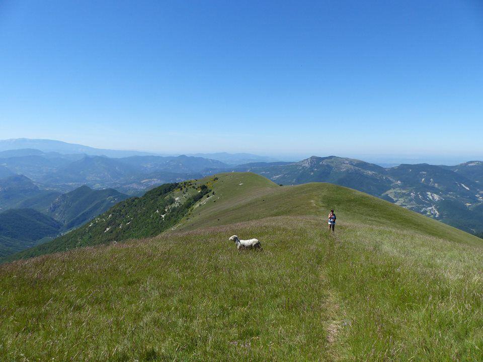 long alpage herbeux, passage d'un mouton égaré !