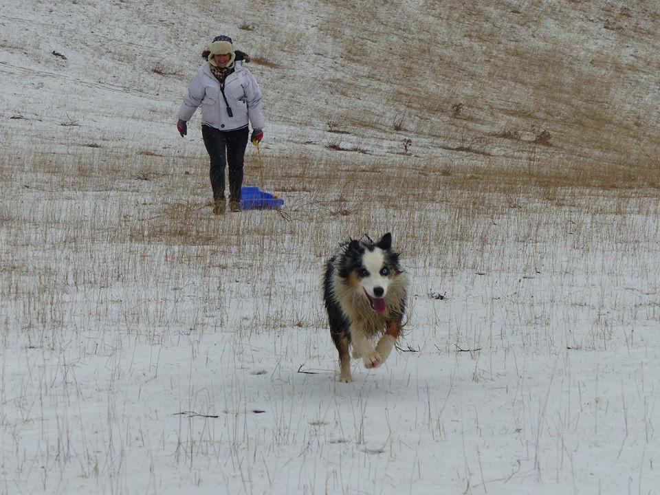 Luna gambade dans la neige