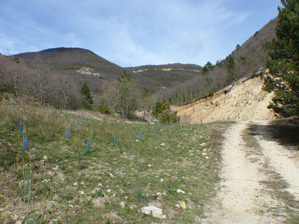 les éleves de Dieulefit on planté une centaine d'arbres l'année dernière sur cette ancienne carrière, pour renaturer le site