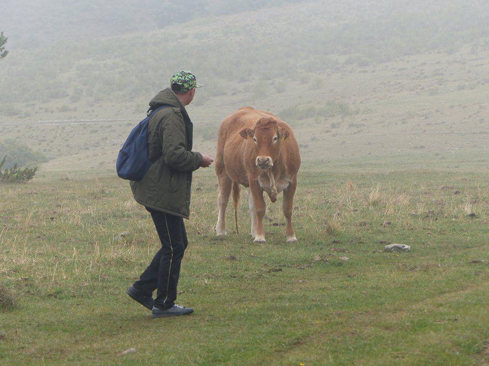 Nico avec une vache