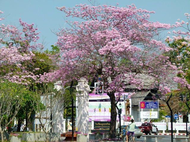 Chiang Mai - la bibliothèque municipale
