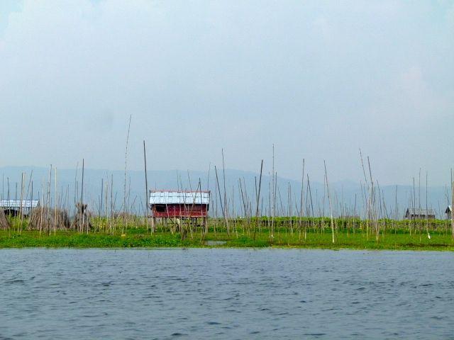 jardins flottants et pêcheurs du lac Inle - Birmanie