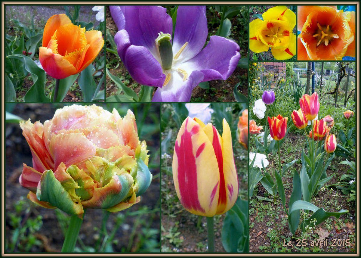 Et oui, encore des tulipes !!!