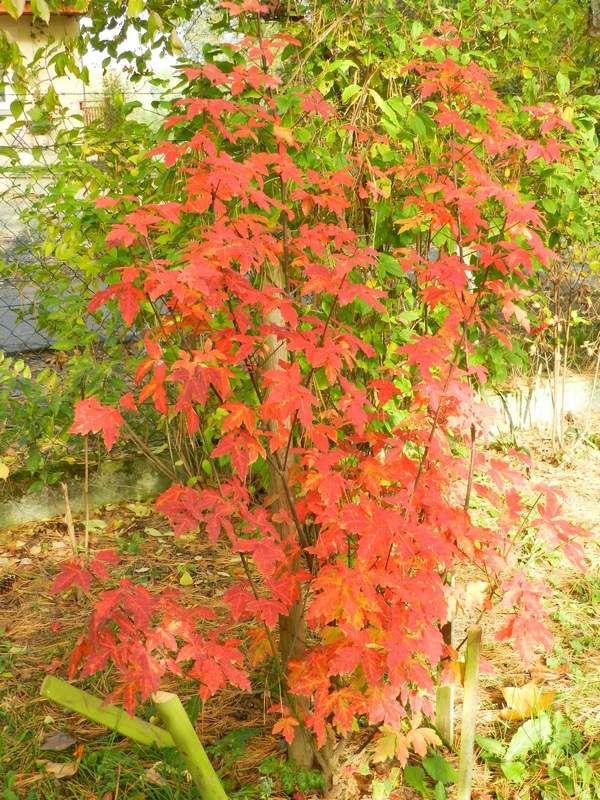 Novembre et des couleurs chatoyantes....