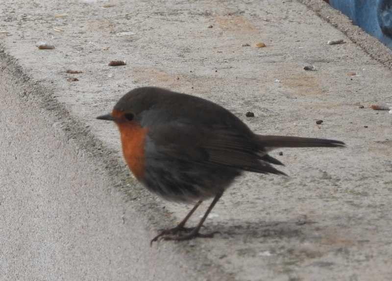 Pensons à nourrir les oiseaux !