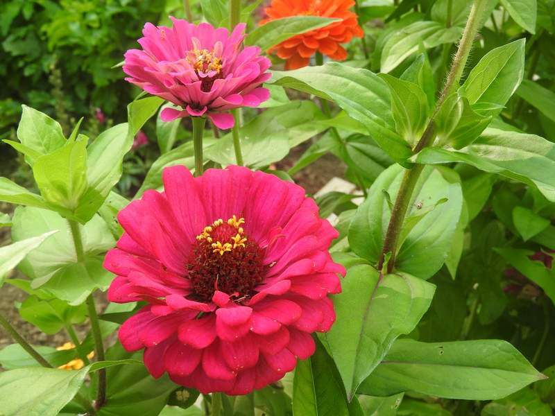 Instant de jardin......
