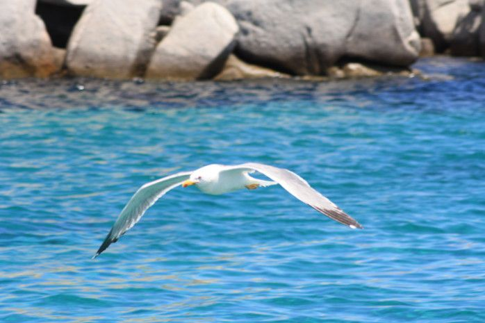 Corse :de la mer à la montagne ...