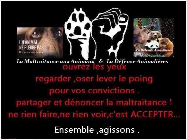 aidez-les animaux!!!!