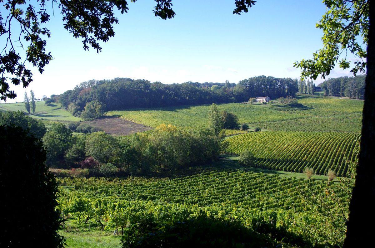 Vignoble de Saussignac - Source Wikipédia