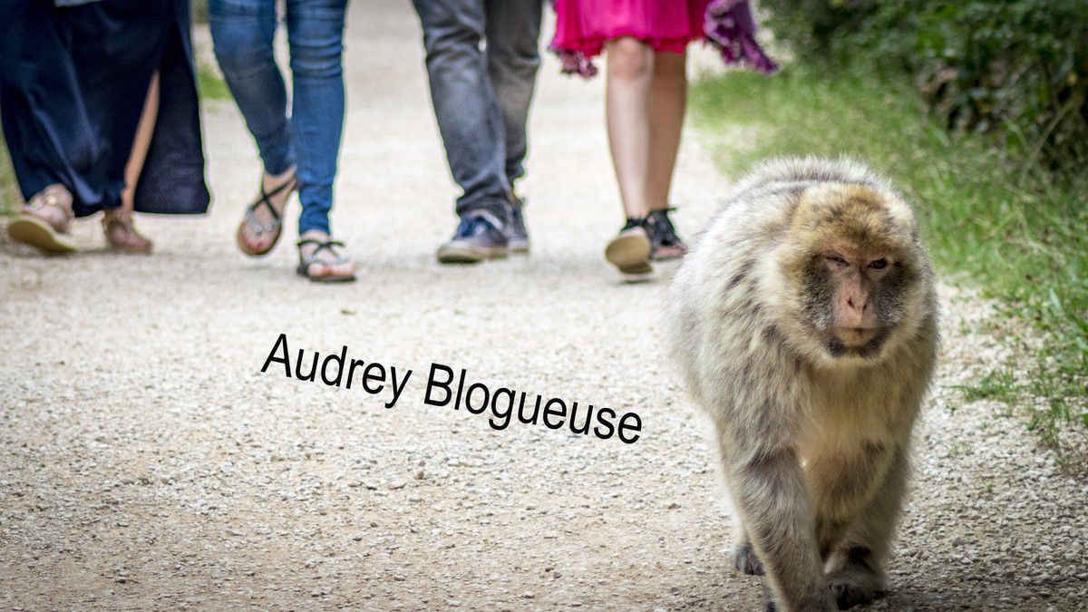 Forêts des singes (Rocamadour )