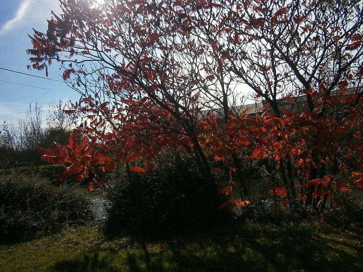 Une saison haute en couleurs