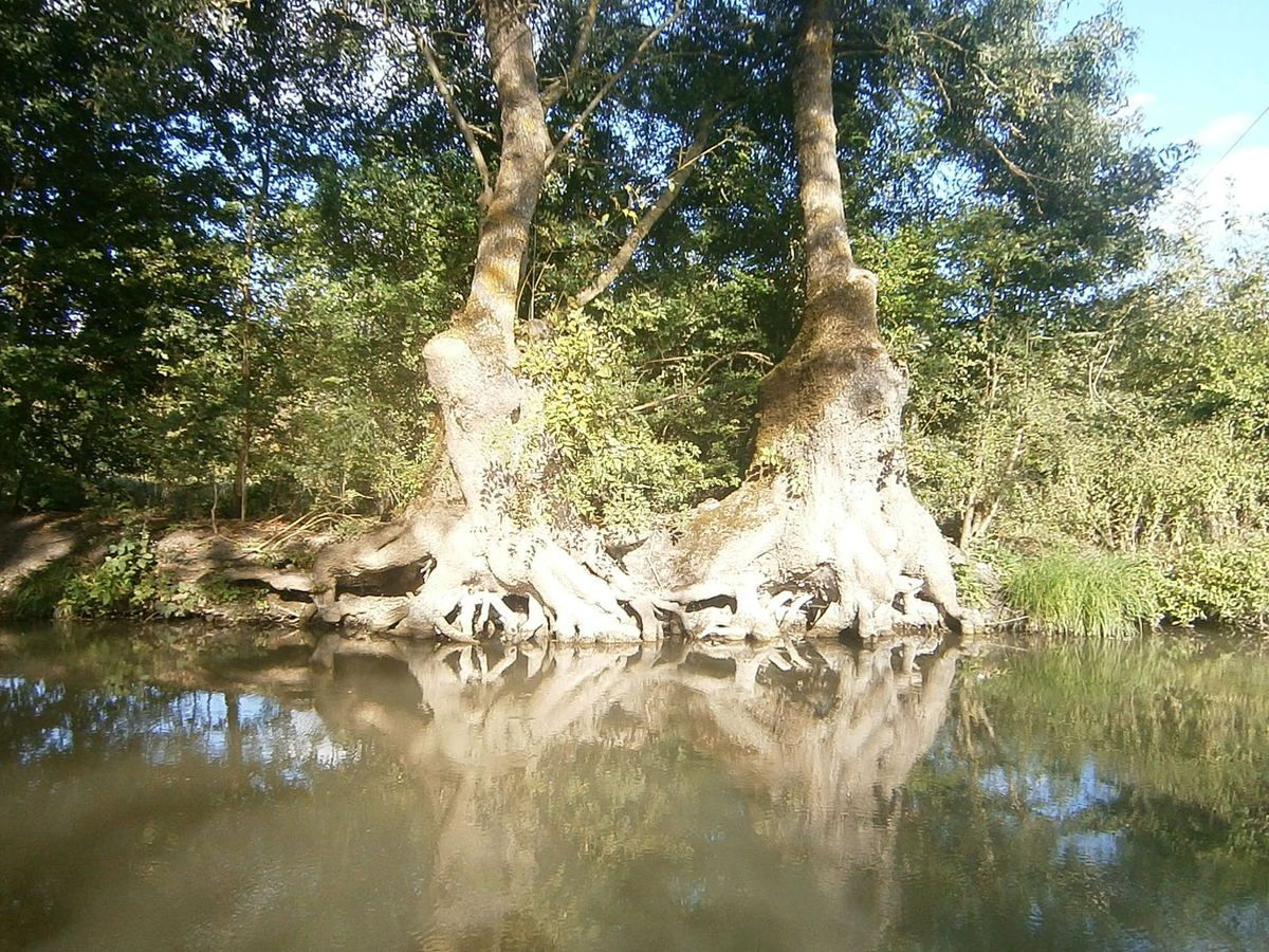 A l'ombre des voùtes de frênes , nous pénétons au coeur d'un univers verdoyant . La douceur de l'ombre , la douce odeur de la tourbe et de l'herbe humides , symphonie des chants d'oiseaux et voilà le marais Poitevin qui s'offre à nous .