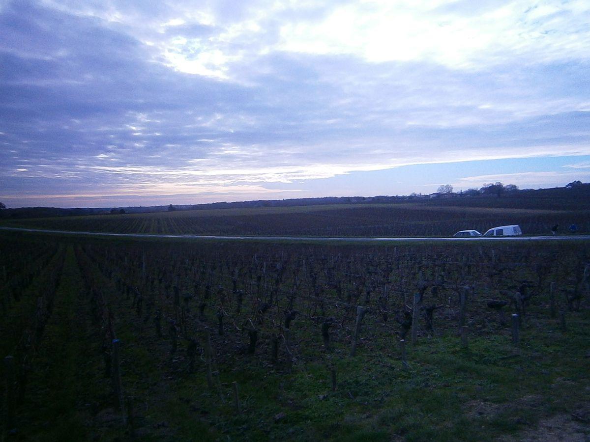 """Du côté d' Ordonnac , le sentier , à l'aide d'un petit """"raidar"""" , va nous propulser sur les hauteurs de Blaignan , dans les vignes ."""