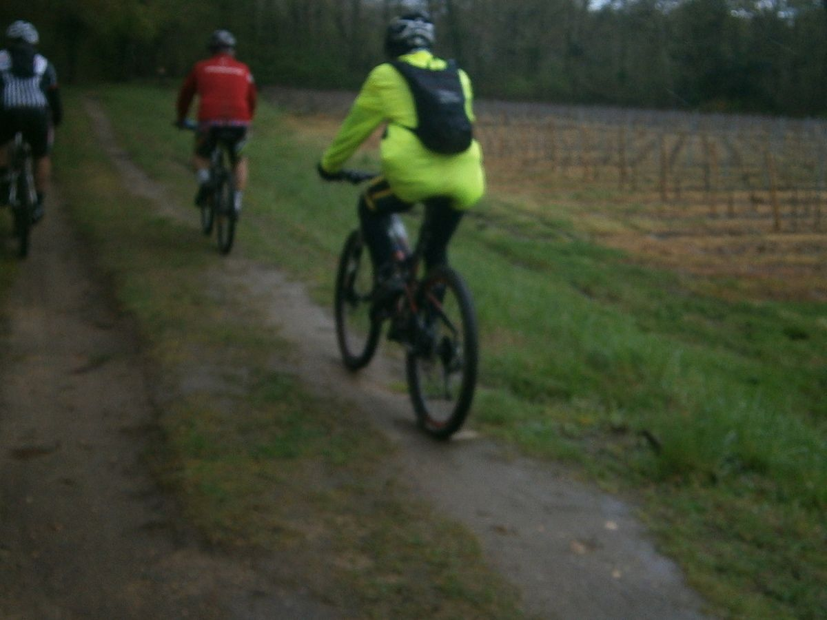 Après les vignes , nous slalomons dans la forêt