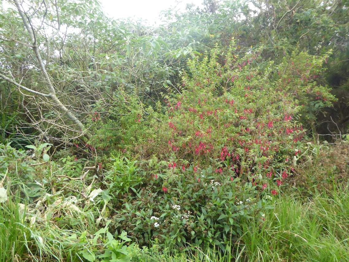 Randonnée en &quot&#x3B;Forêt des Hauts de Mont Vert.&quot&#x3B;