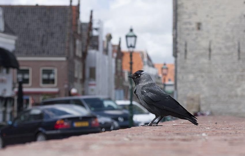des oiseaux à foison