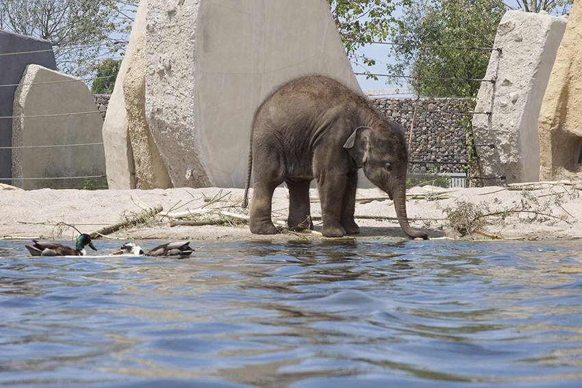 oh! eau au zoo