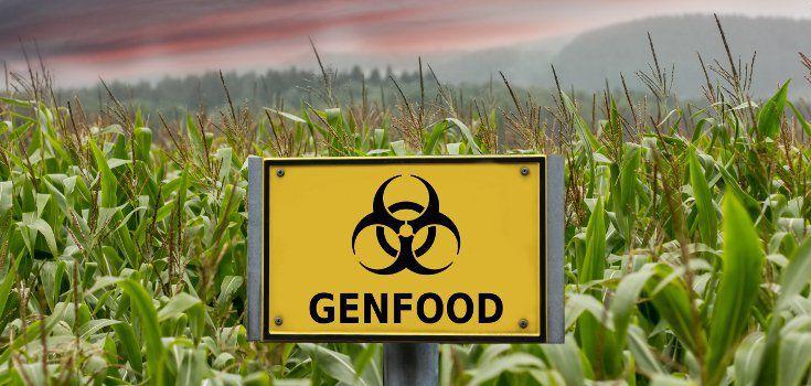 L'Europe autorise les OGM : la France n'a pas la possibilité de s'y opposer