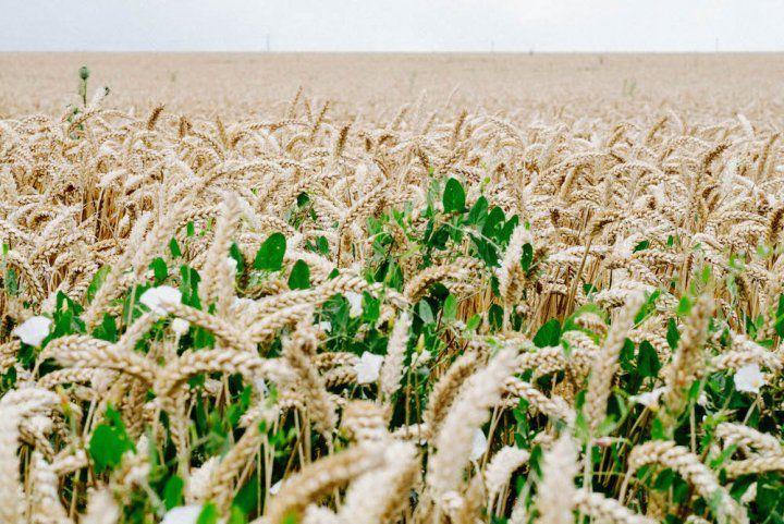 La ferme de demain, écolo et prospère, existe déjà!