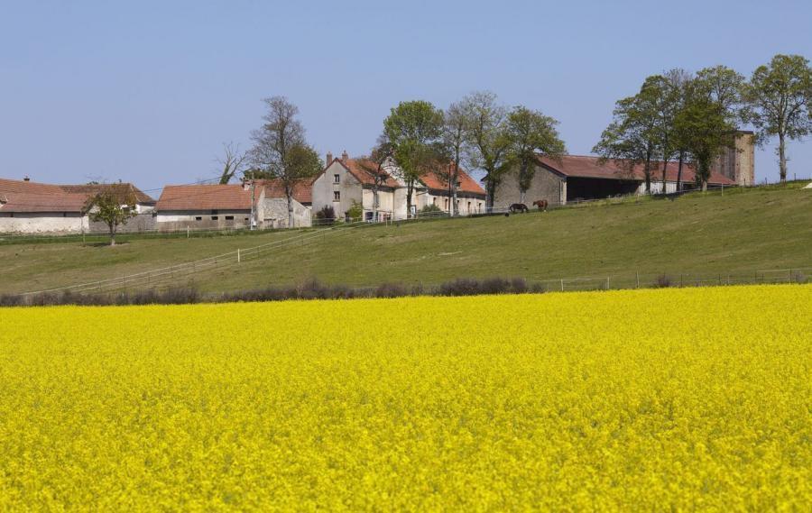 Vallée de la Brosse. Ce site est protégé de l'urbanisation par le Périmètre de protection des espaces agricoles et naturels périurbains. (DR.)