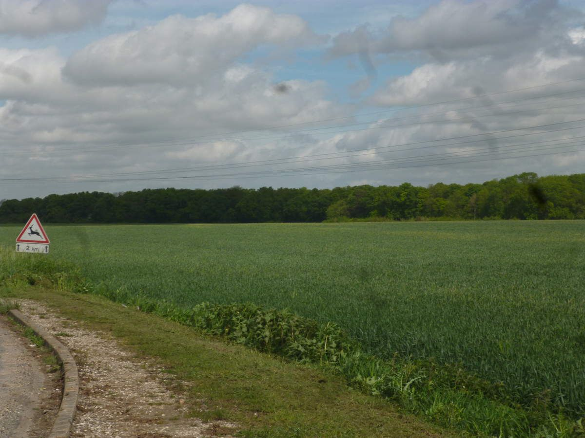 Villevaudé espaces agricoles et  le bois Gratuel
