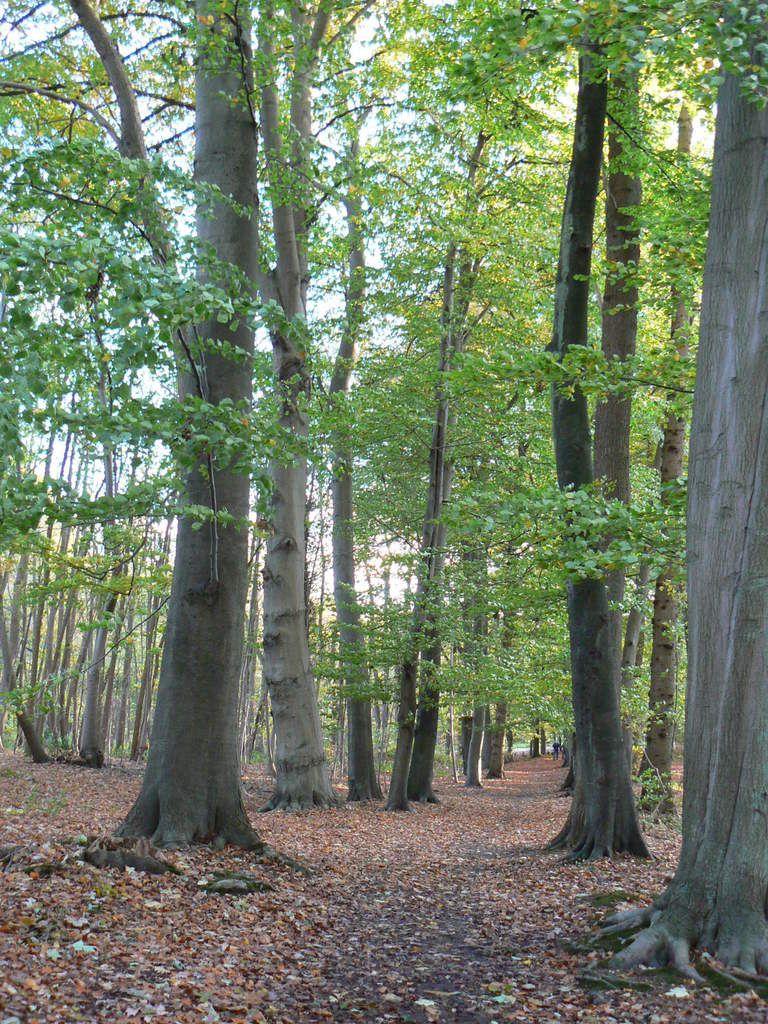 forêt régional de Montgé en Goële à l'automne