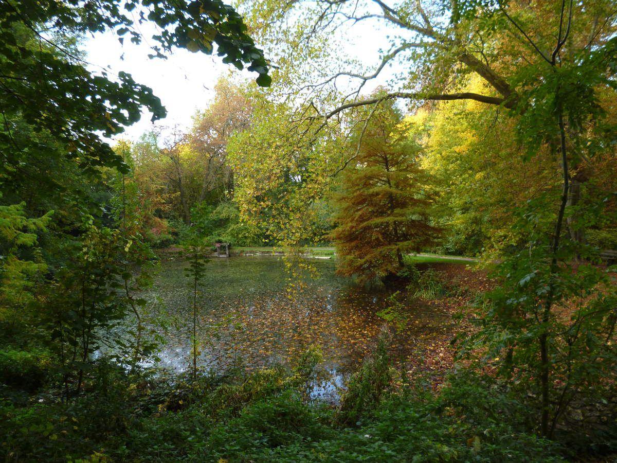 l'étang dans la Forêt régionale de Montgé en Goële
