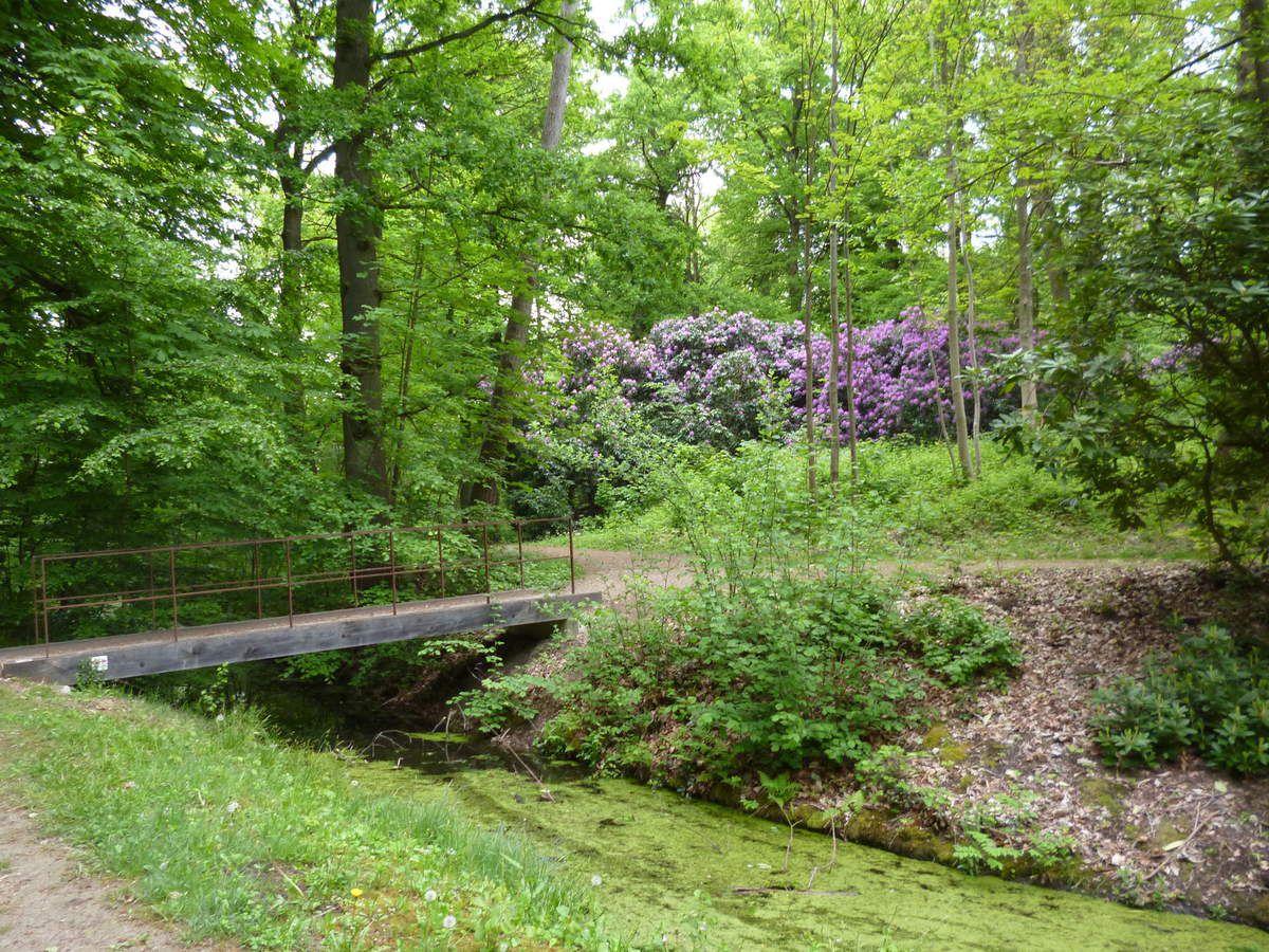 Patrimoine de Seine et Marne : la magnifique forêt de Montgé en Goële qu'on veut détruire pour exploiter une carrière de gypse  !