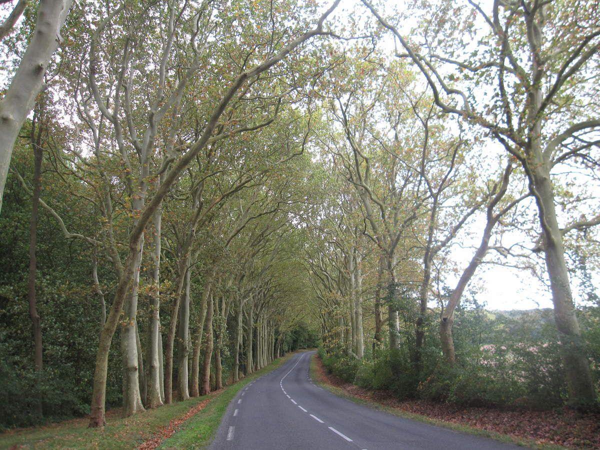 Nord-ouest 77 Forêt régionale de Montgé en Goële :un banquier d'origine allemande la protégea, un industriel allemand veut la détruire
