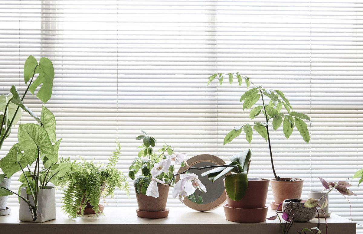 studio avec plantes vertes a part a. Black Bedroom Furniture Sets. Home Design Ideas
