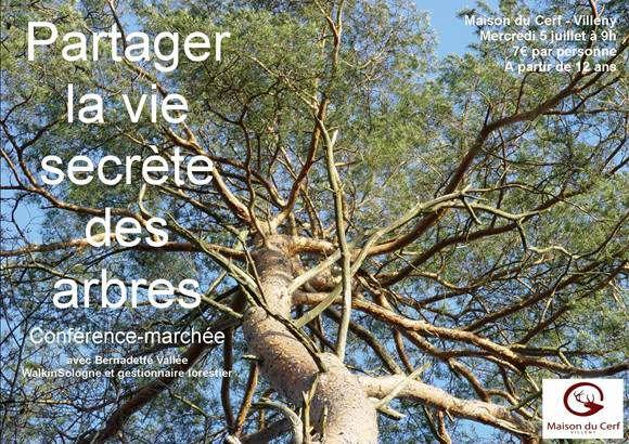 Partager la vie secrète des arbres : une conférence-marchée avec Bernadette Vallée