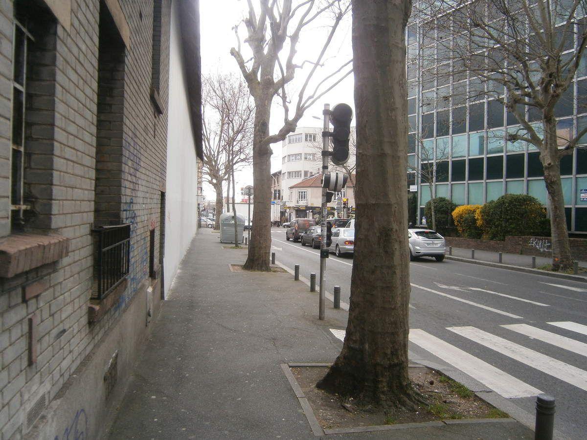 Nature en ville, platane avenue du général de Gaulle, Bagnolet Écologie écrit au Département