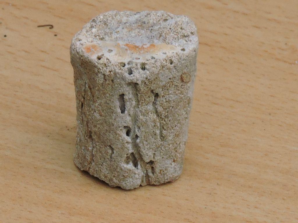 bois fossilisé ou branche de corail