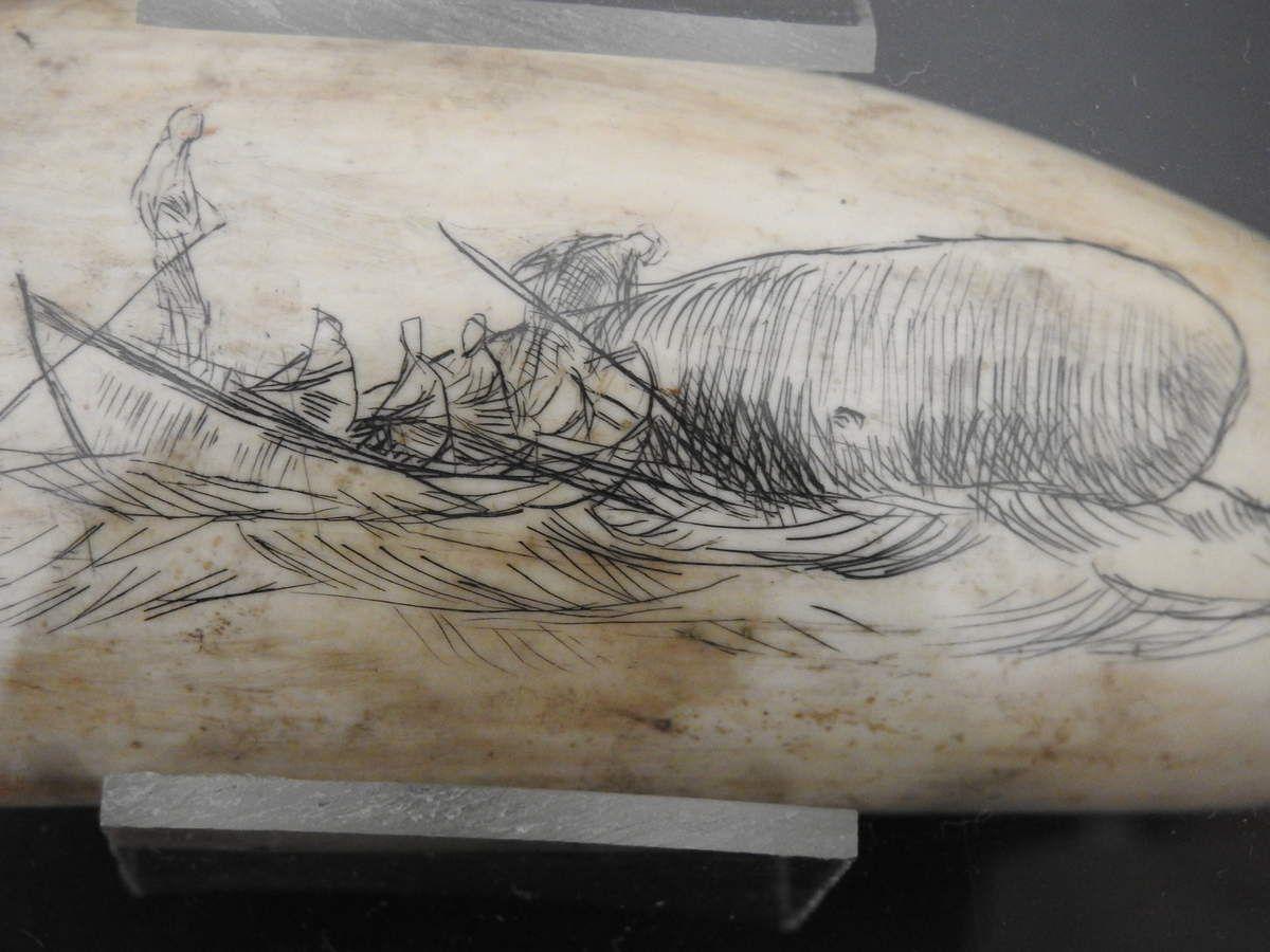 SCIENCES NATURELLES ET ART : CHASSE AUX CACHALOTS GRAVES SUR UNE DENT DUDIT ANIMAL