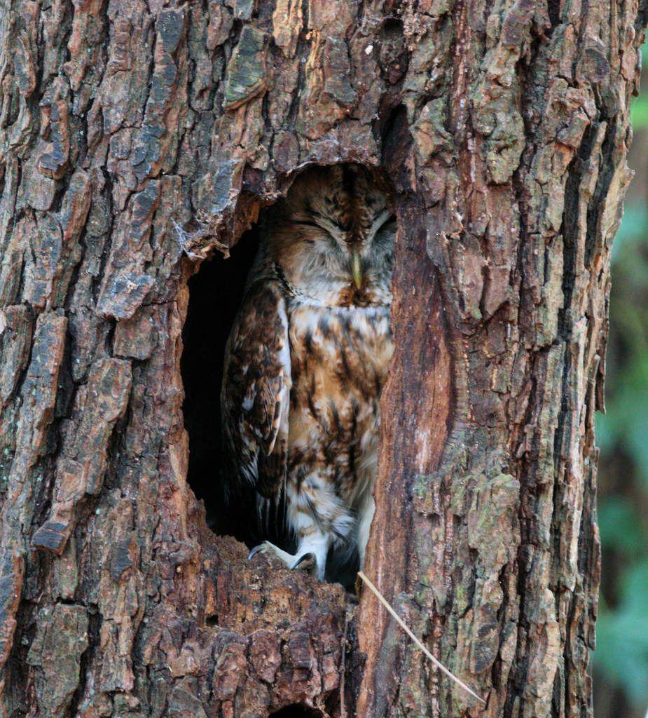Photos de nos amis : rapace nocturne, passereau diurne