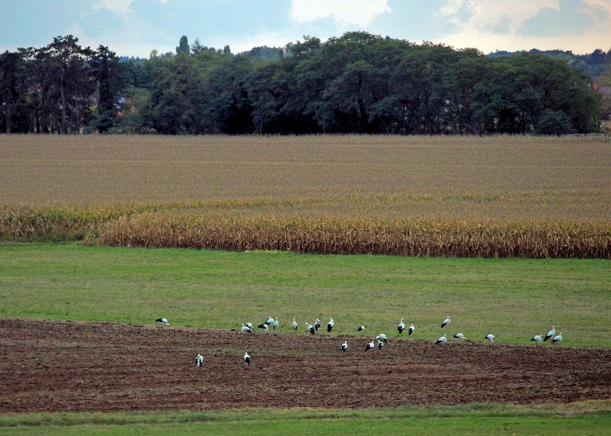 La halte des Cigognes blanches