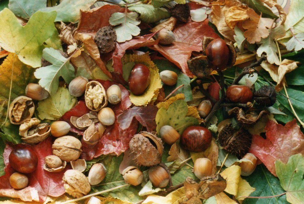 et si on mettait les fruits d'automne en scène ?