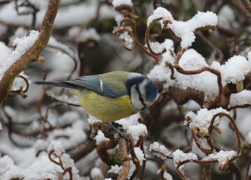 L 39 hiver au jardin le blog de christianlegac for Hiver au jardin