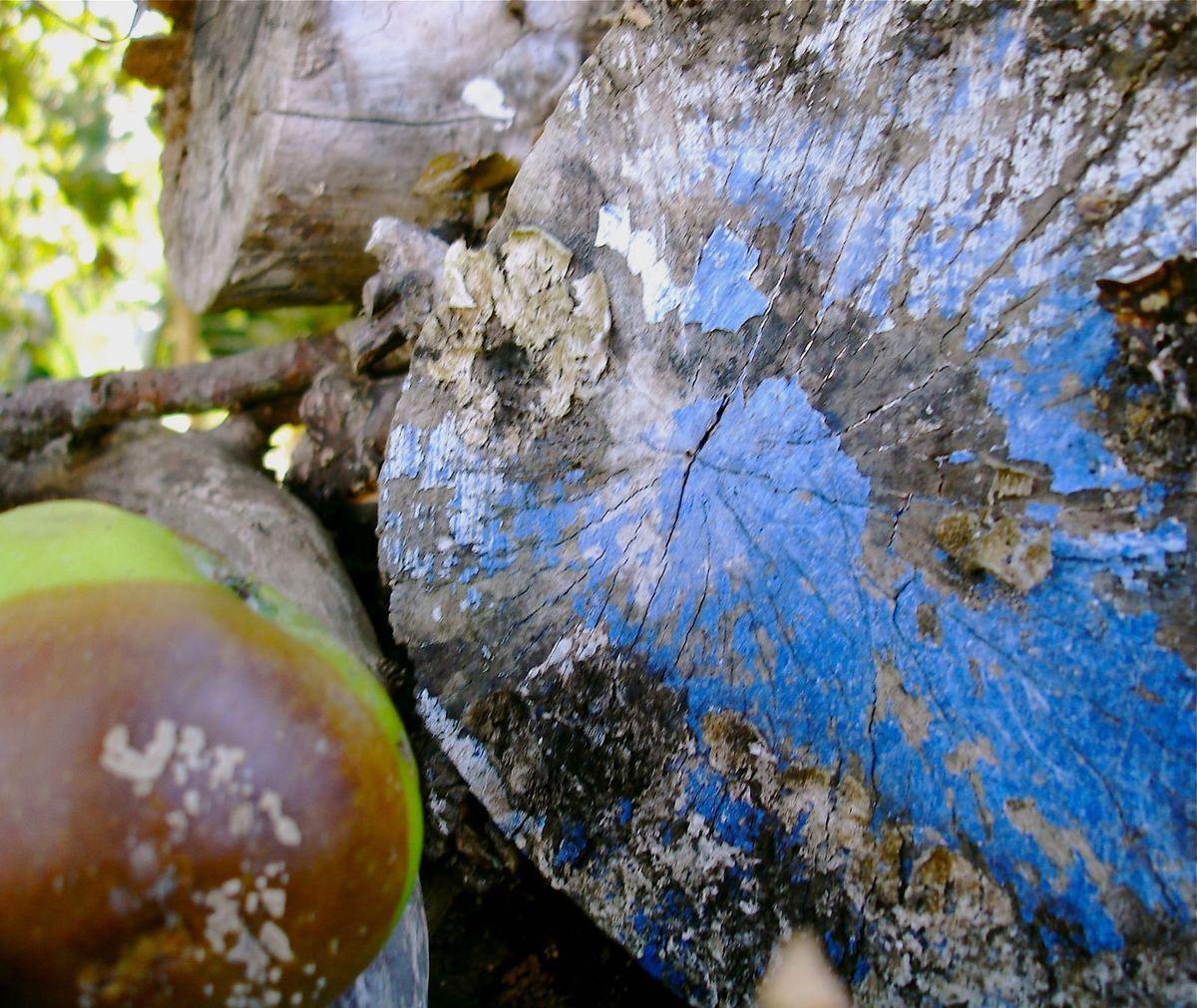 pommes, bois, peinture bleue